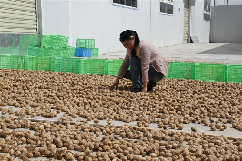 桑蚕产业链展示图片